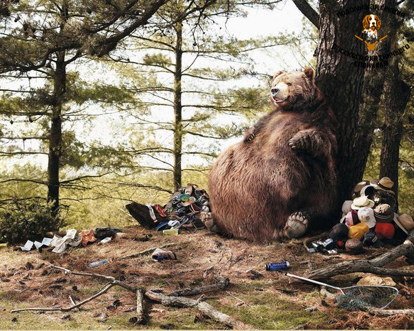 Funny_wallpapers_Bear_in_campaign_016222_.jpg
