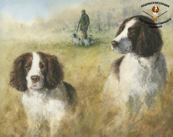 phoca_thumb_l_Springer-Spaniels-hunting.jpg